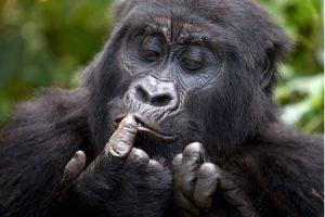 2 Days Rwanda Gorilla