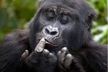 3 Days Rwanda Gorilla trekking Adventure