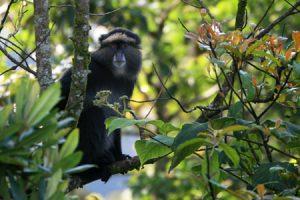 Uganda Rwanda Safari adventure