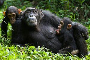 gorilla safari adventure