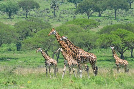 3-days-Murchison-falls-safaris