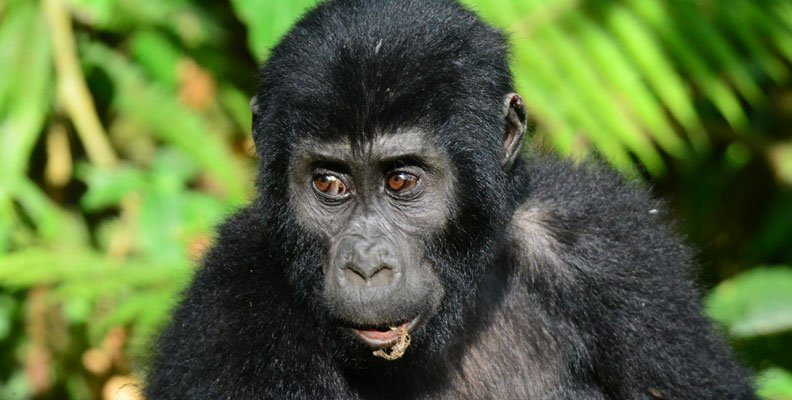3 Days Gorilla tracking Bwindi Adventure