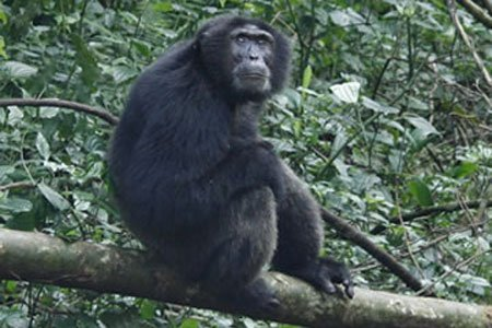 7 days Uganda Primate Expeditions