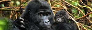 5 days-gorilla-trekking