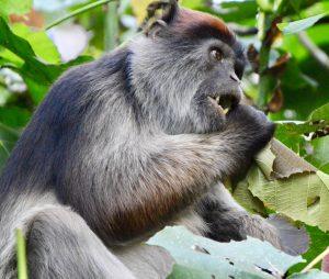 7-days-uganda-primate-safari