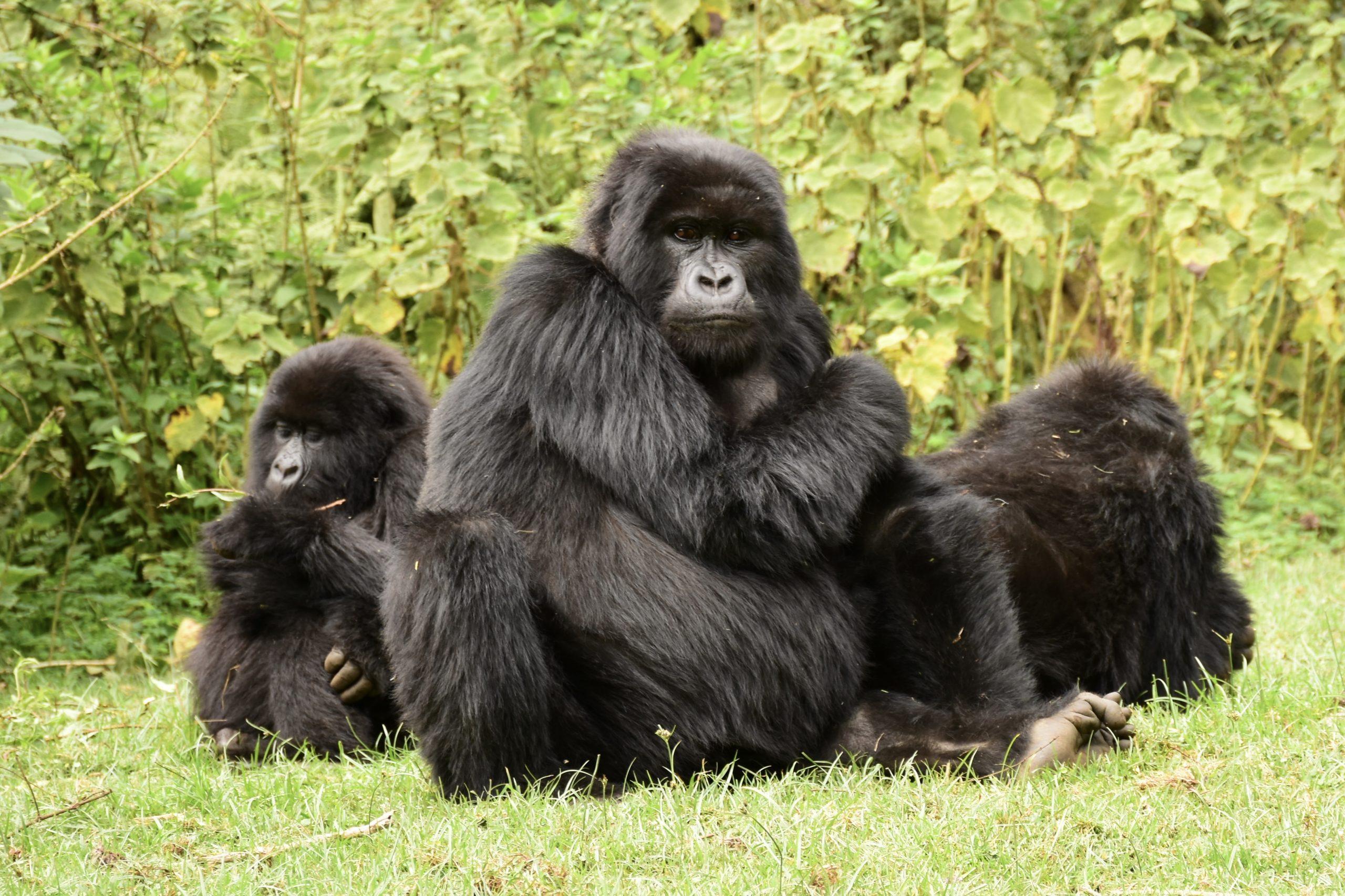 5-days-gorilla-safari-Uganda