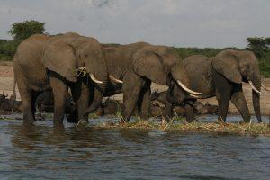 Rwanda Rwanda Safari