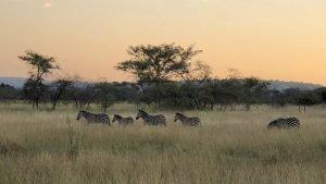8 Days Rwanda Safari