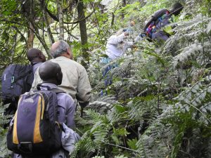 Questions about gorilla trekking