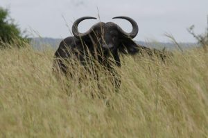 Kidepo Valley Wildlife Safari