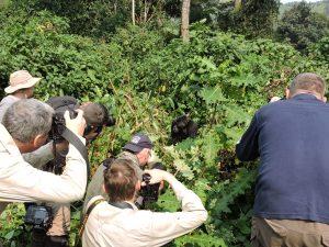 10 Days Uganda Gorilla safari & Wildlife tour