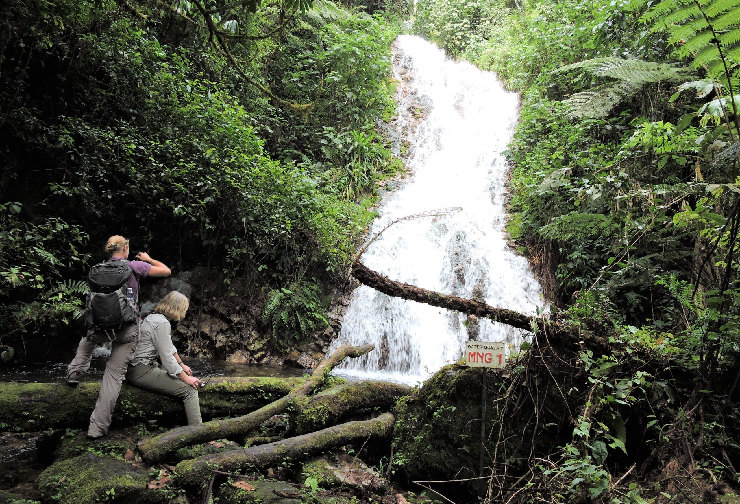 Top Things to Do in Bwindi Forest National Park