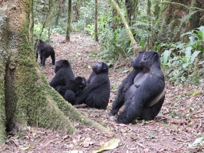 Top things to do in Bwindi Impenetrable national park